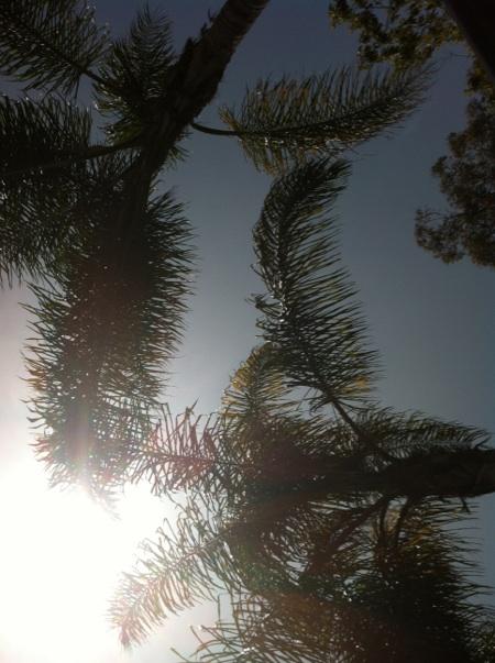 Irvine, California - Palm Trees & Sunshine