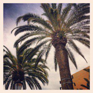 Palm Trees va Instagram