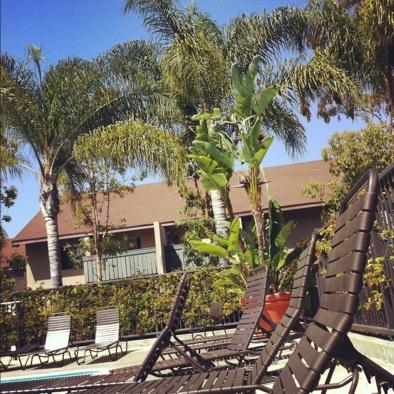 California Palmtree at Spectrum in Irvine