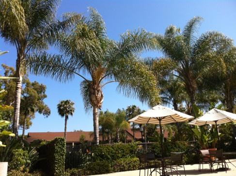 Palm Trees & Greenery