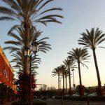 California Palm trees at Spectrum in Irvine