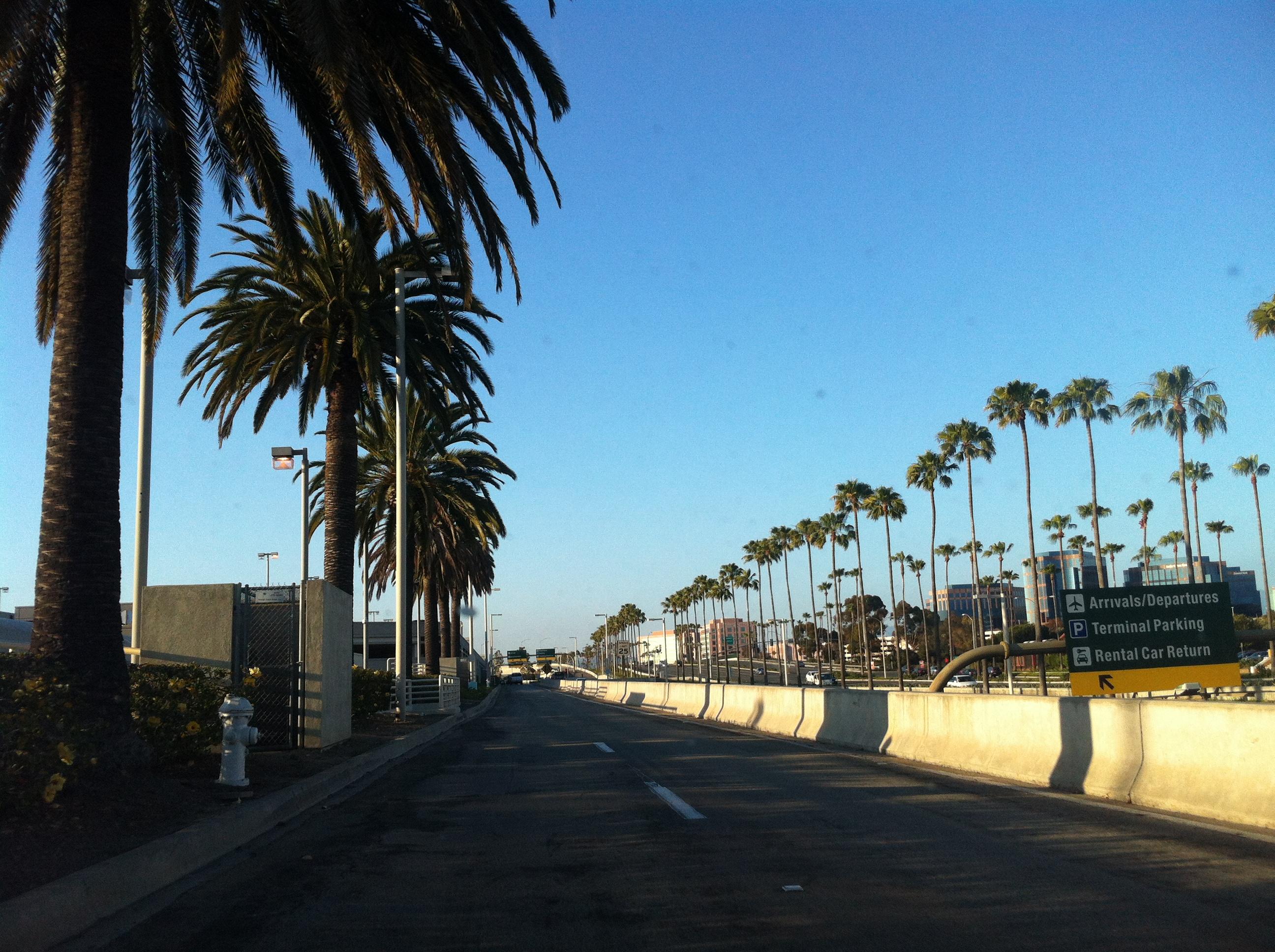 Irvine, California Palm Trees