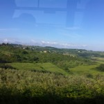 Tuscana Vineyard
