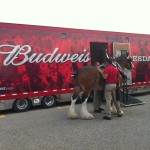 Clydesdale Budweiser Petoskey