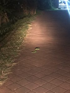 melissa snake